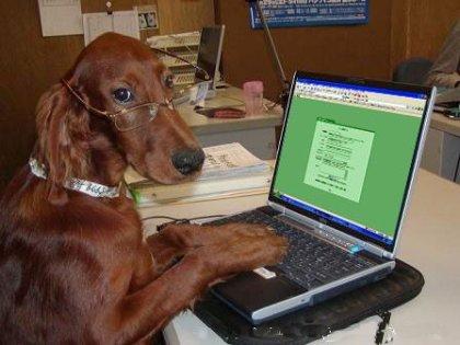 Rufus el perro